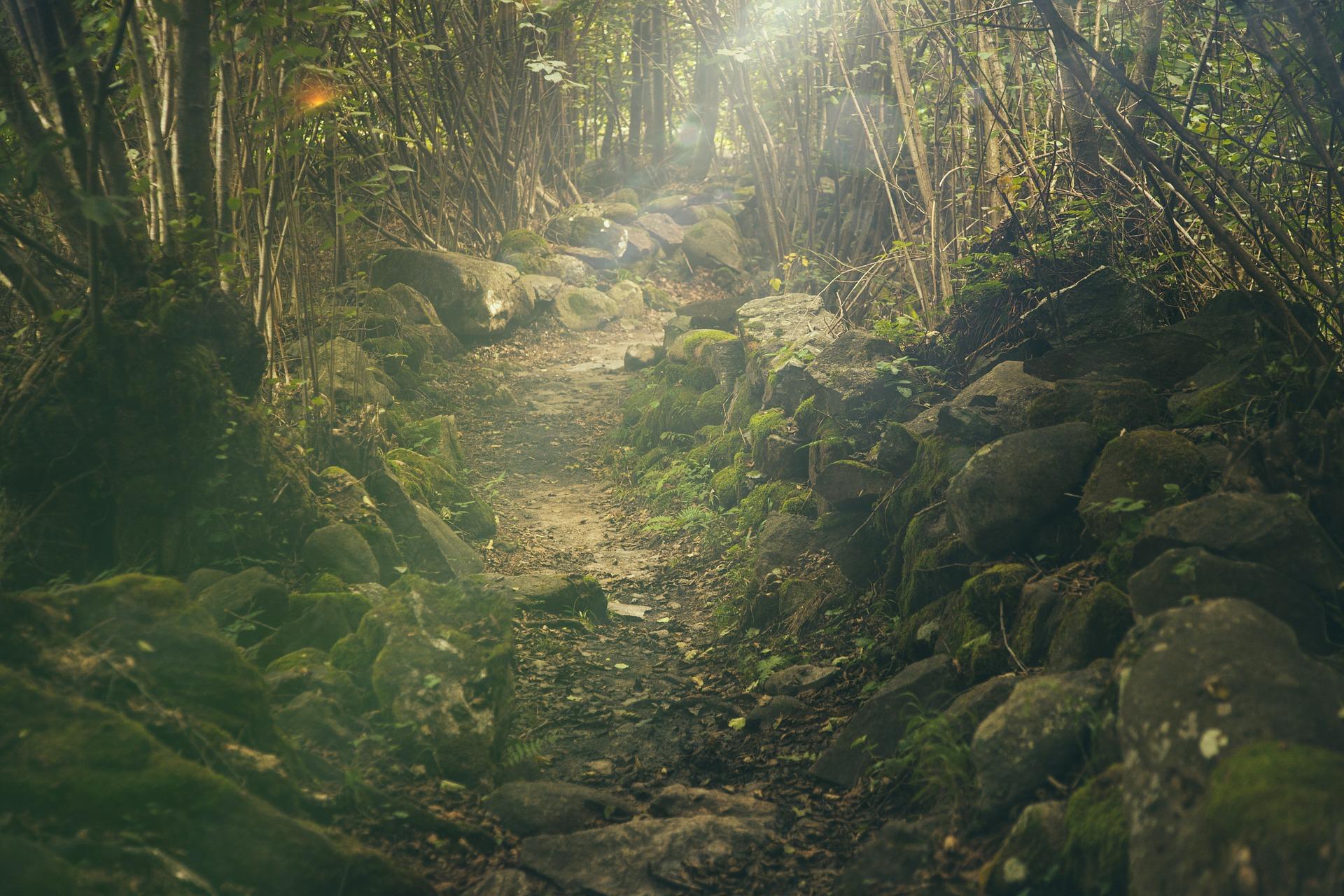 A Path Not So Smooth- Udaybhanu Singh
