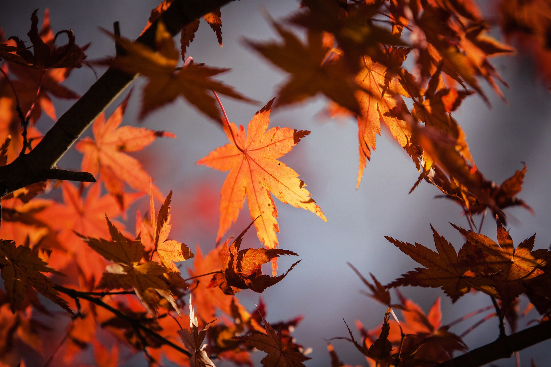 Fall is Here – Shaivi Shubh