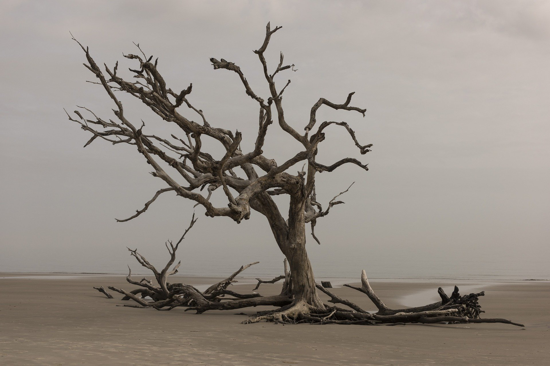 Lone End – Mythri Anand